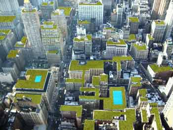 city of green rooftops