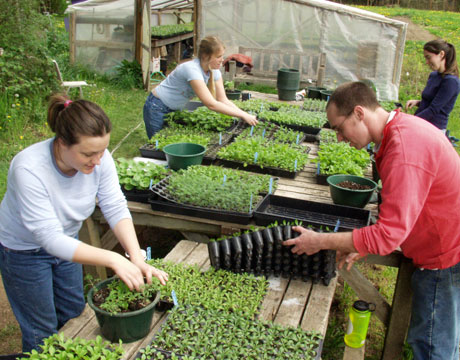 farming growing organic